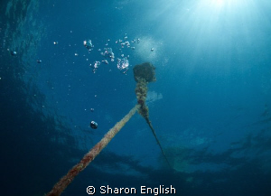 Mooring line on the Konanda Wreck. by Sharon English 